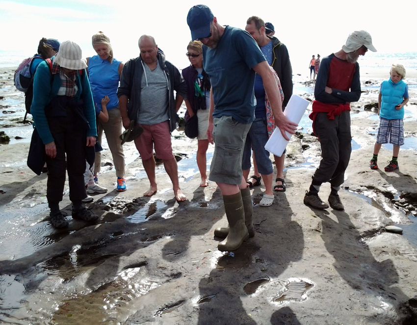 Guided walk of the trees stumps and peat exposed at Borth
