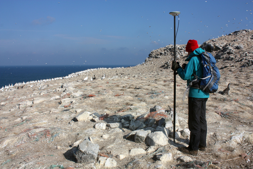 Fragmentary walls survive from an early settlement excavated in 1972, now surrounded by gannet nests.