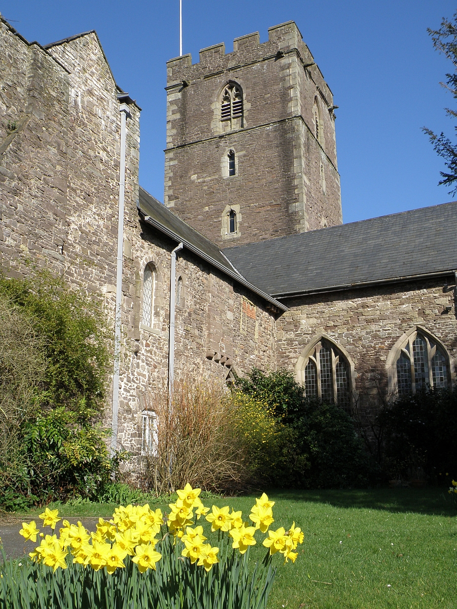 St Mary's church, Abergavenny Church with daffodils, taken by Paul R. Davis, c.2011. PRD_02_0157