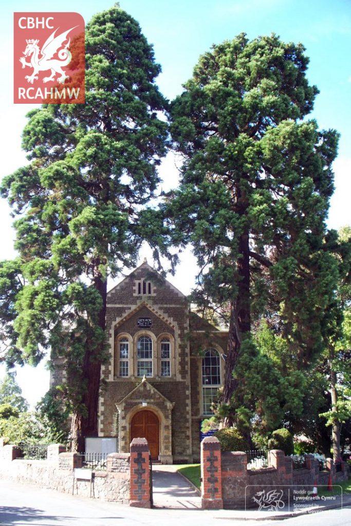 Coed Wellingtonia mawr yn fframio mynedfa dde-ddwyreiniol Capel y Bedyddwyr Caersalem, Llaneirwg, 2008