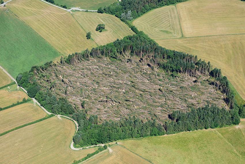 Storm levelled woodland, Trawscoed 2018